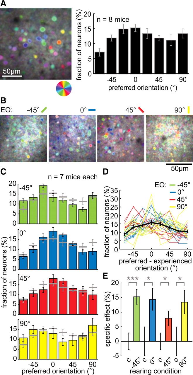 Altered Visual Experience Induces Instructive Changes of