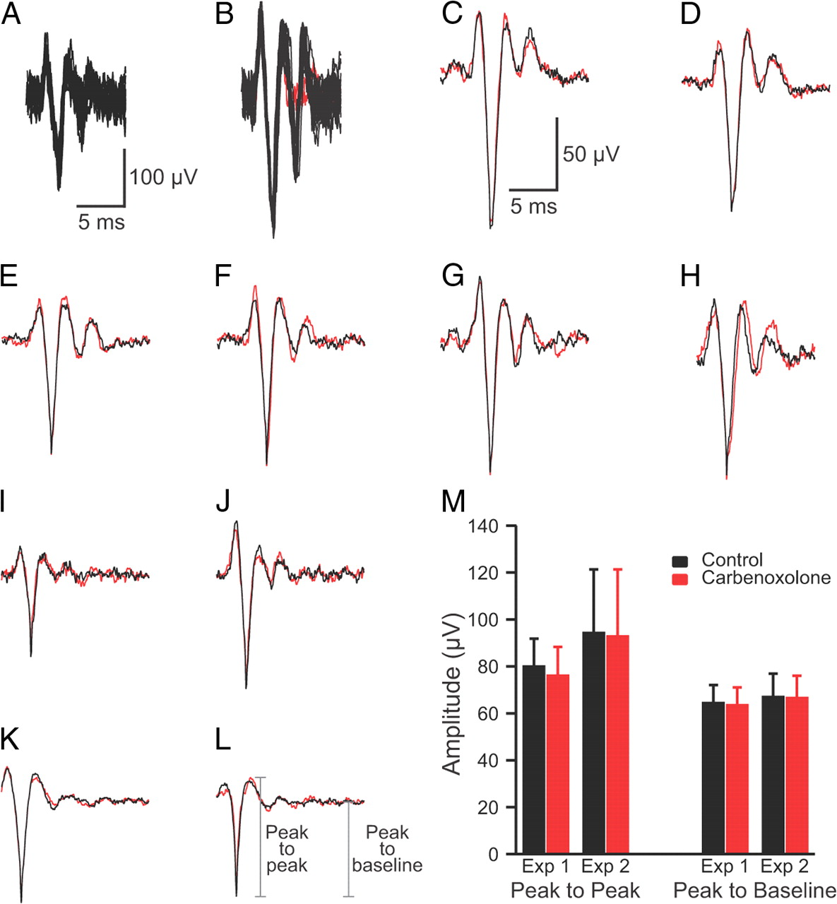 Synaptic Action of the Olivocerebellar System on Cerebellar Nuclear