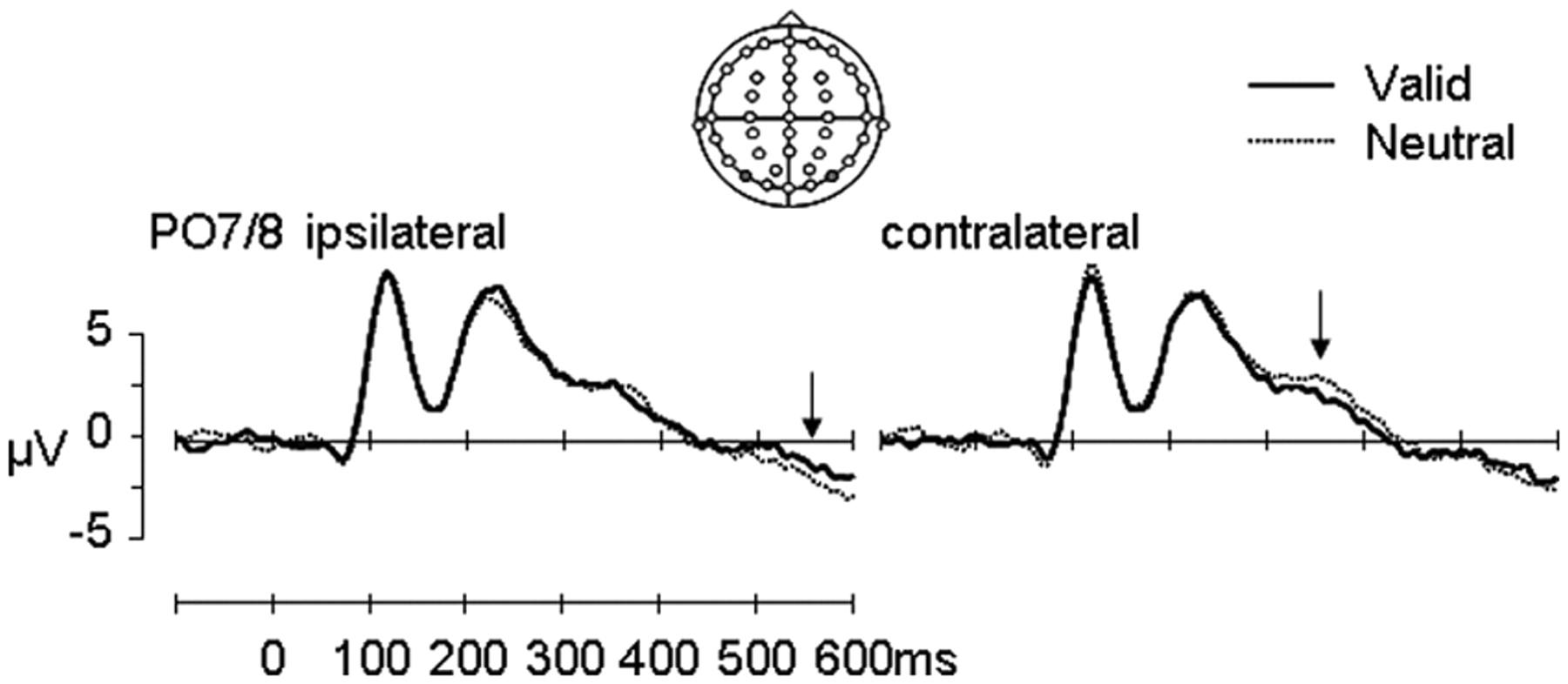Biasing Perception by Spatial Long-Term Memory | Journal of ...