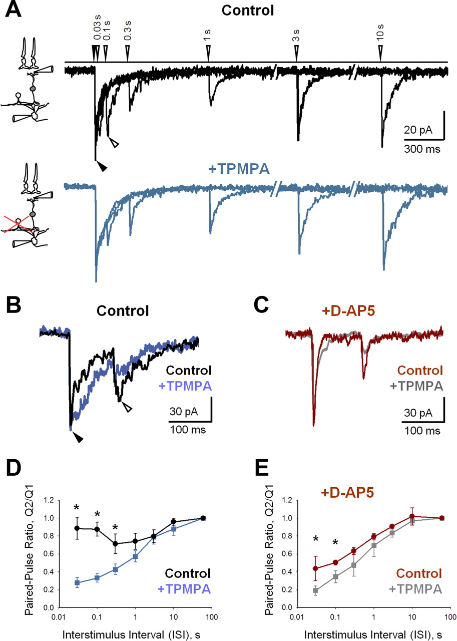 Nonlinear Interactions Between Excitatory And Inhibitory Retinal Anatomy Of A Short Circuit Open Electrical Download Figure In New Tab