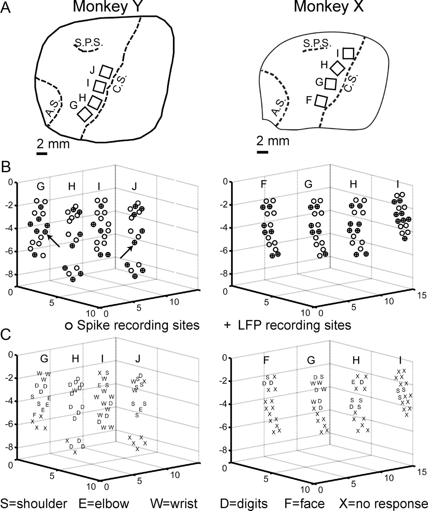 Spatiotemporal Variation Of Multiple Neurophysiological Signals In 1911 Pistol Diagram Parts Free Download Wiring Diagrams Pictures Figure Open New Tab Powerpoint