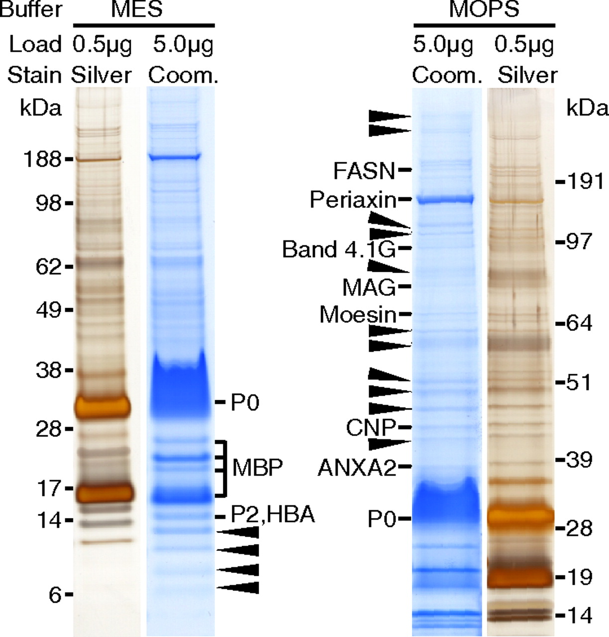 Quantitative and Integrative Proteome Analysis of Peripheral