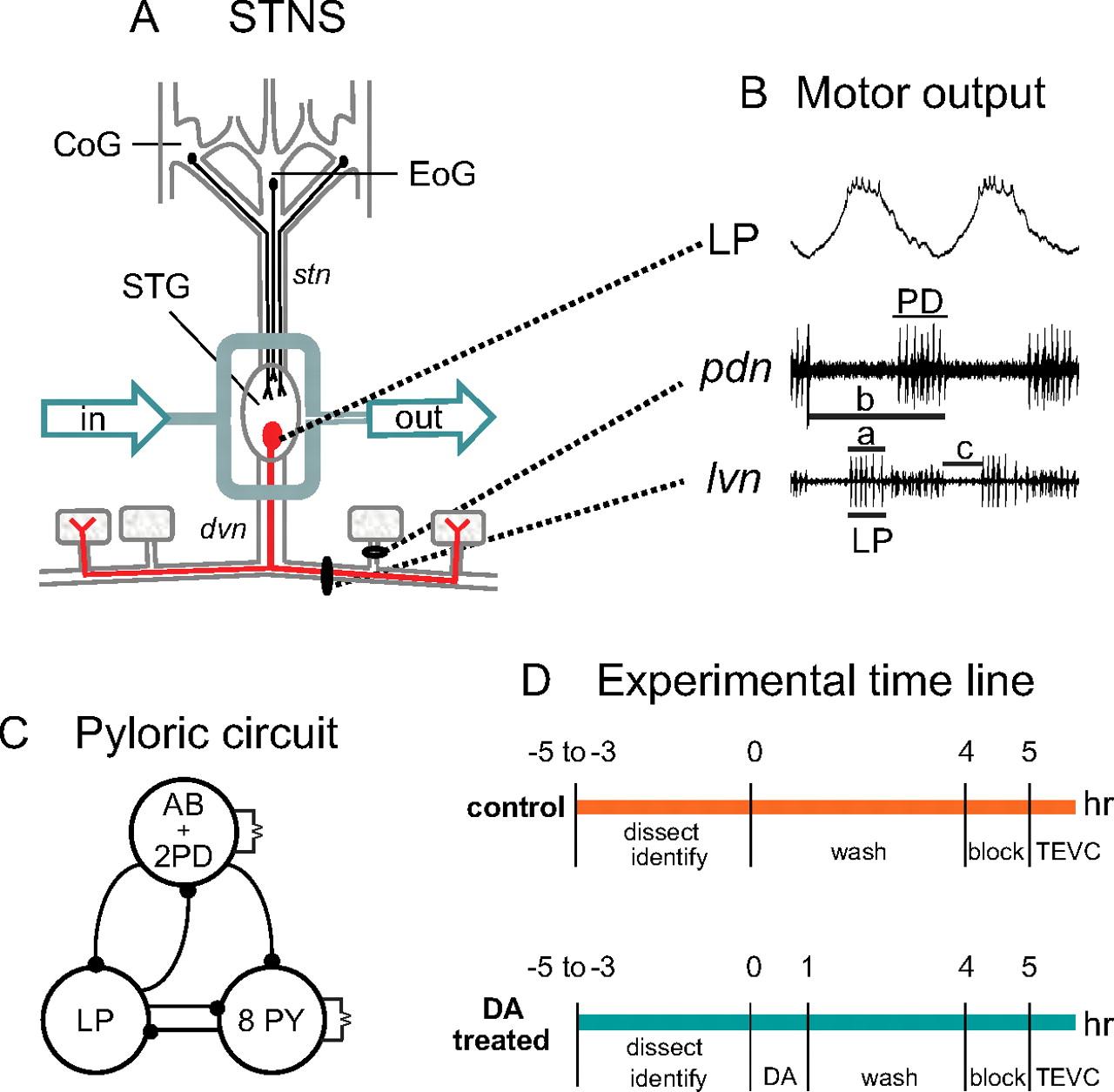 Tonic Nanomolar Dopamine Enables an Activity-Dependent Phase