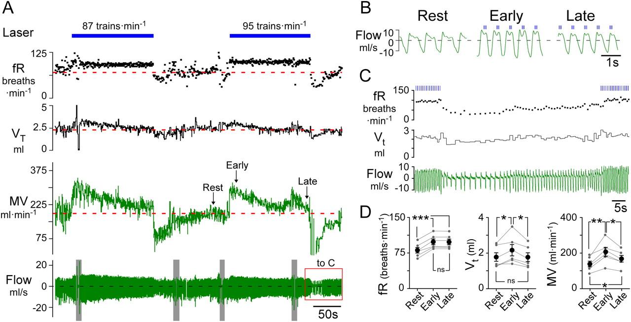 Phox2b Expressing Neurons Of The Parafacial Region Regulate Pure Apnea Level 1 Course Download Figure