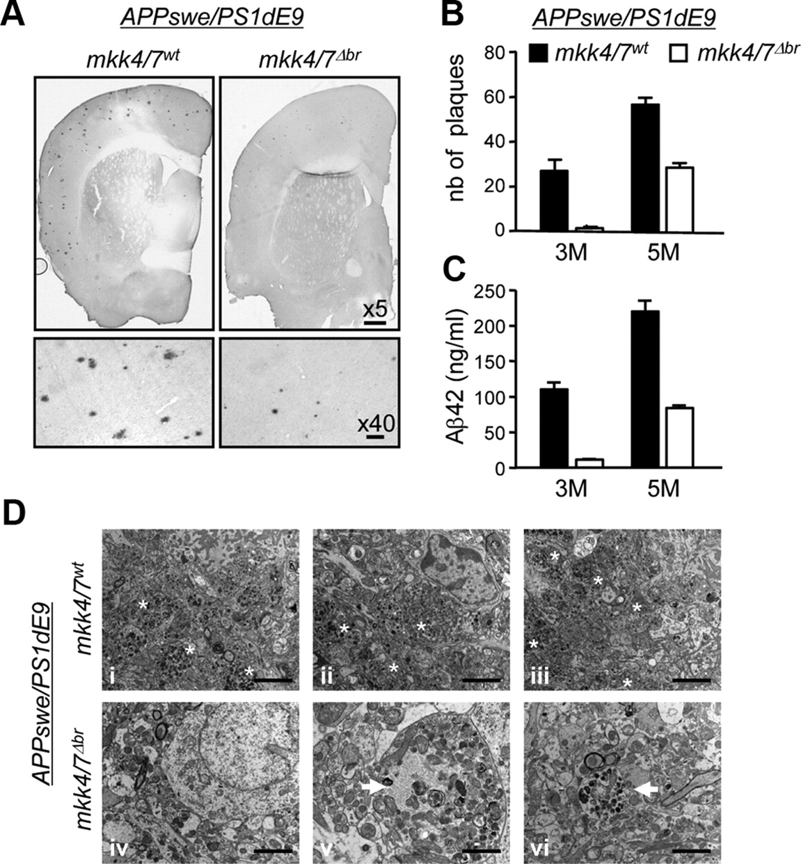 The Loss of c-Jun N-Terminal Protein Kinase Activity Prevents the