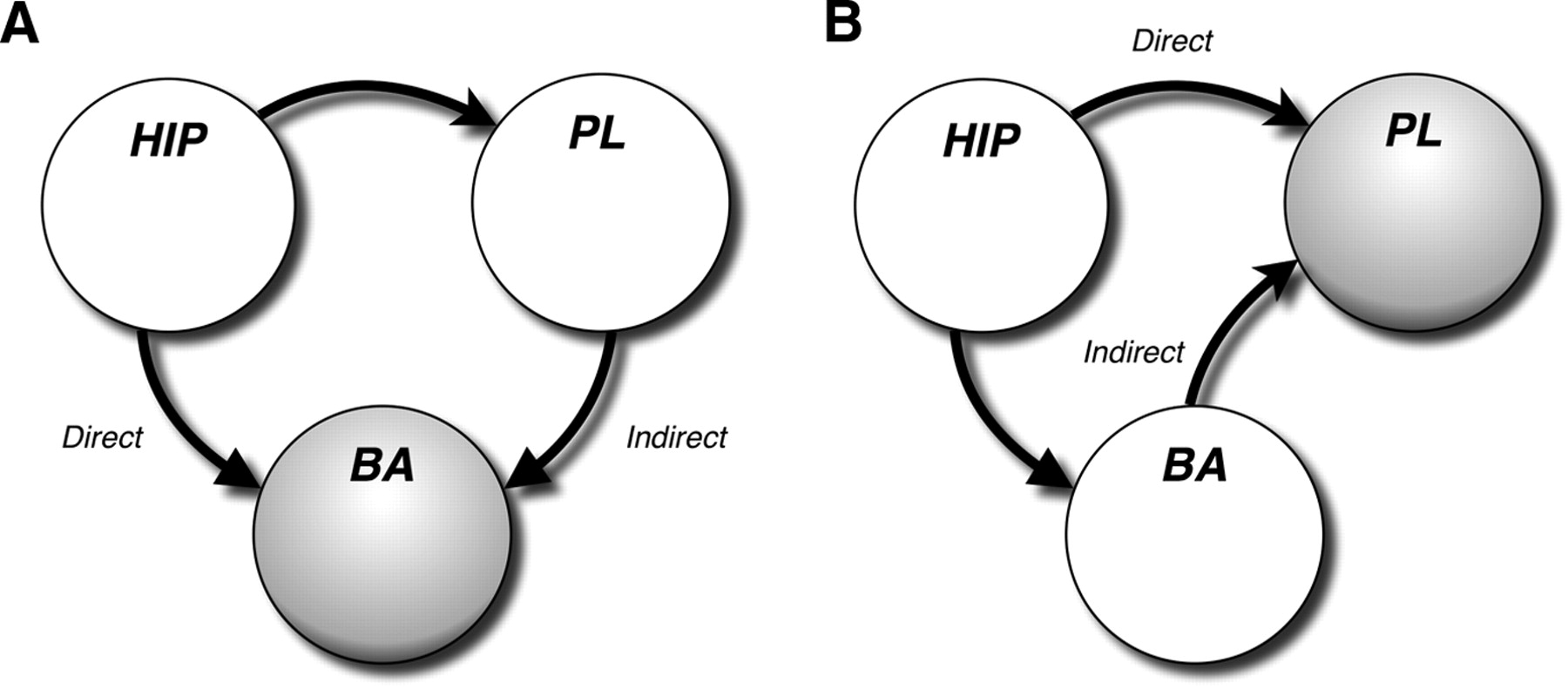 hippocampal and prefrontal projections to the basal amygdala mediate