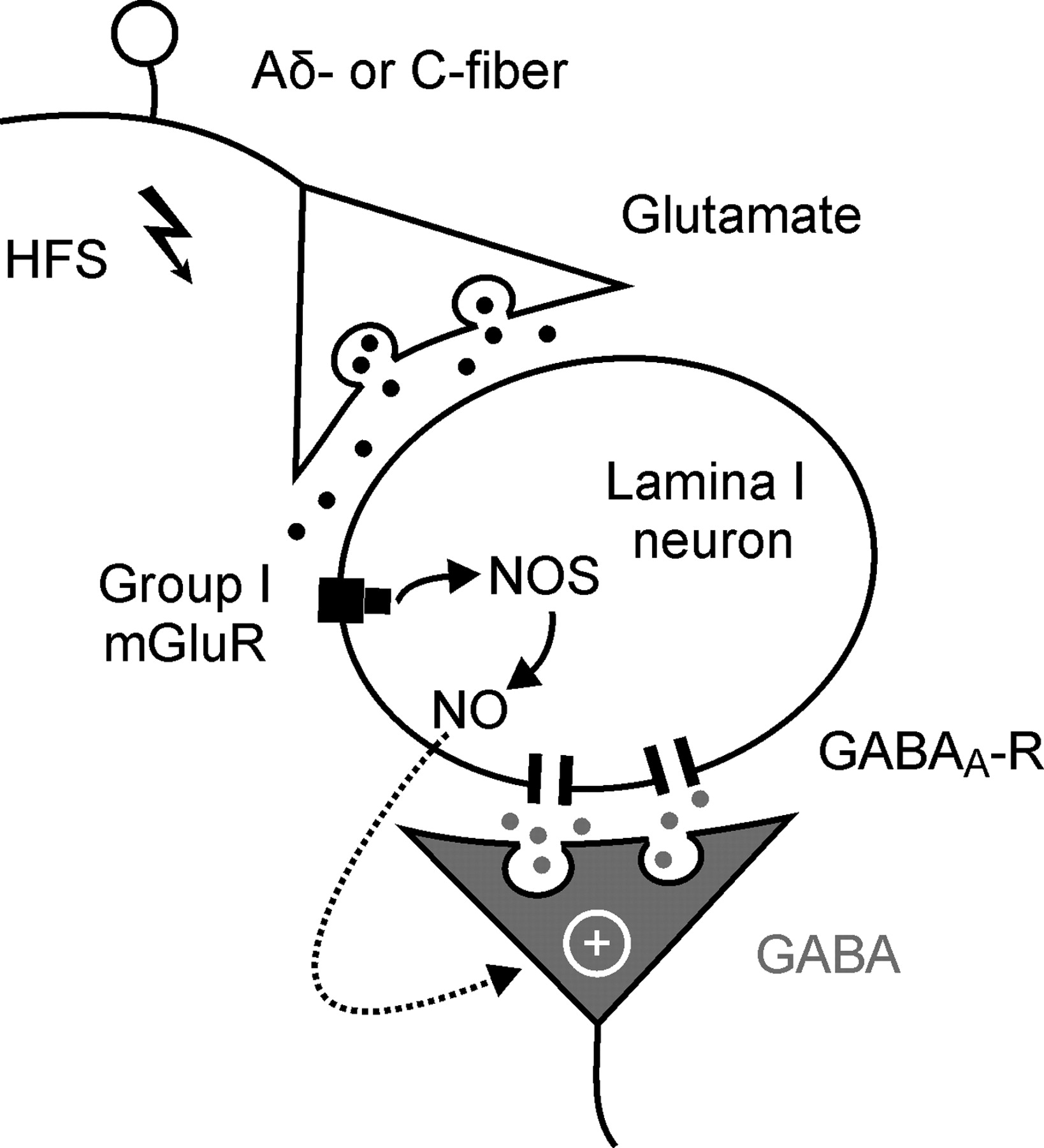 heterosynaptic long term potentiation at gabaergic synapses of Knee Diagram download figure