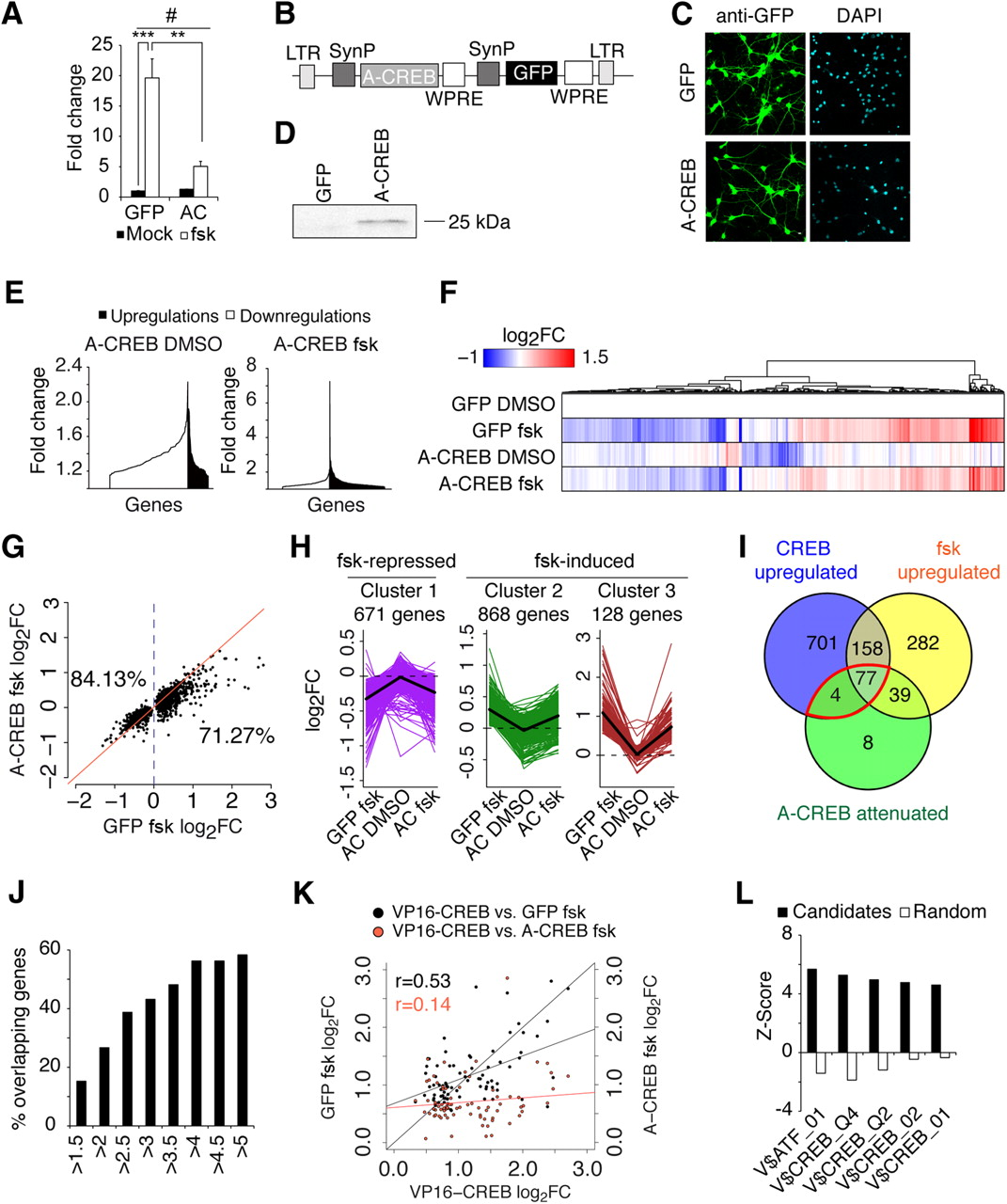 cAMP Response Element-Binding Protein Is a Primary Hub of Activity