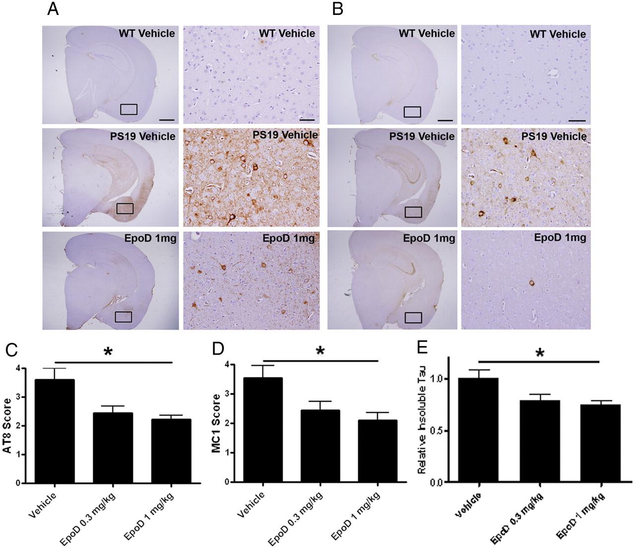 The Microtubule Stabilizing Agent Epothilone D Reduces Axonal Wk Hemi Engine Compartment Diagram Download Figure