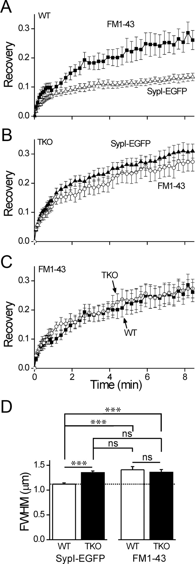 Synapsin Selectively Controls The Mobility Of Resting Pool Vesicles 2102 Focus Fuse Box Download Figure