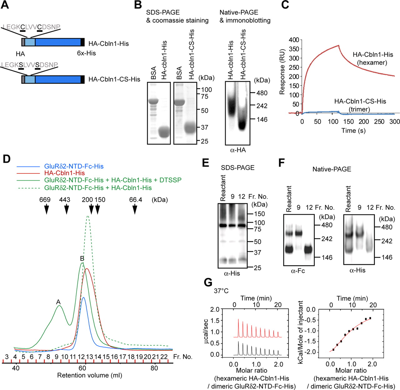 Glur2 Assembles Four Neurexins Into Trans Synaptic Triad To Trigger Takeuchi Wiring Diagram Download Figure