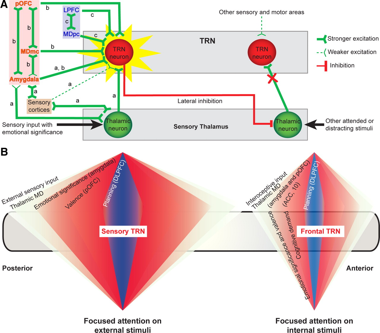 Pathways For Emotions And Attention Converge On The Thalamic Wiring Diagram Moreover No Load Tone Pot Download Figure
