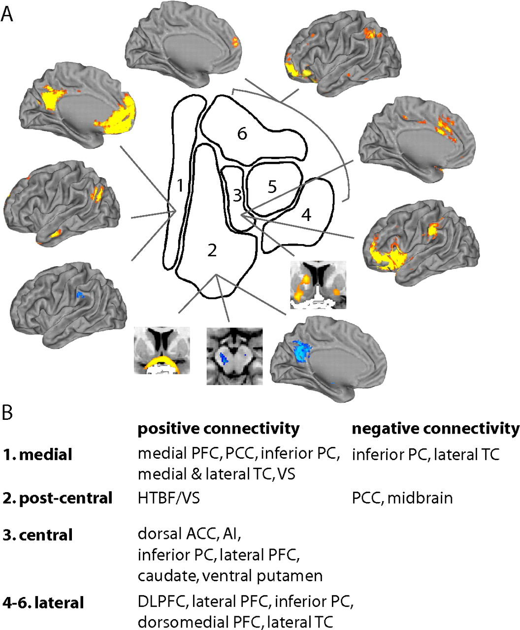 Connectivity Based Parcellation Of The Human Orbitofrontal Cortex