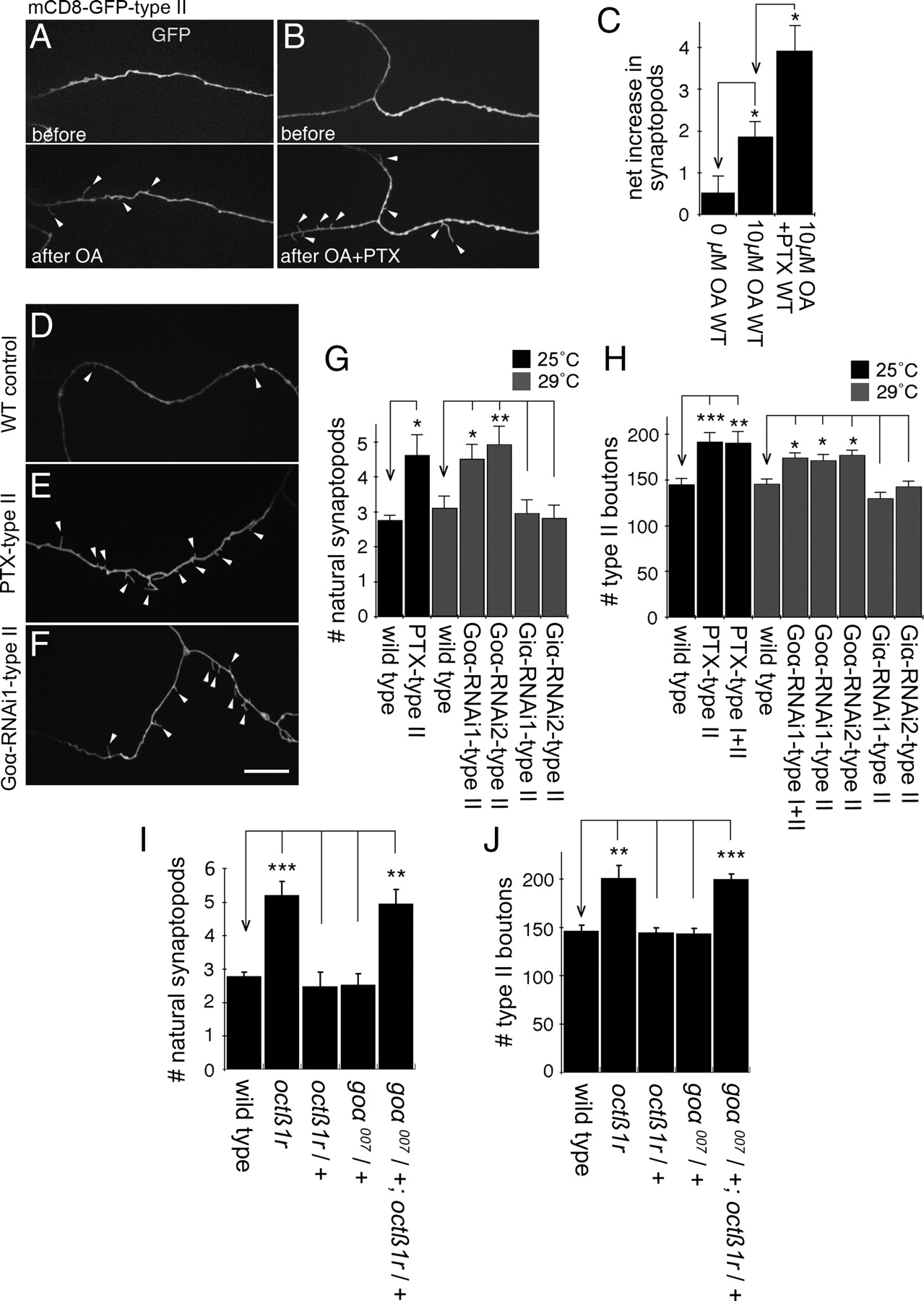Inhibitory Control of Synaptic and Behavioral Plasticity by