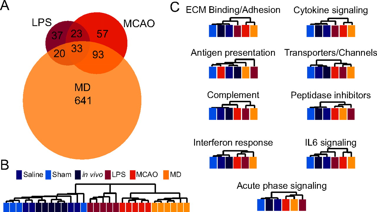 Genomic Analysis of Reactive Astrogliosis | Journal of
