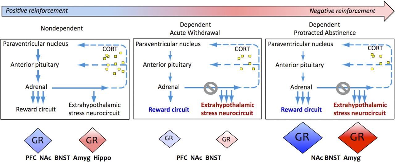 Corticosteroid-Dependent Plasticity Mediates Compulsive Alcohol