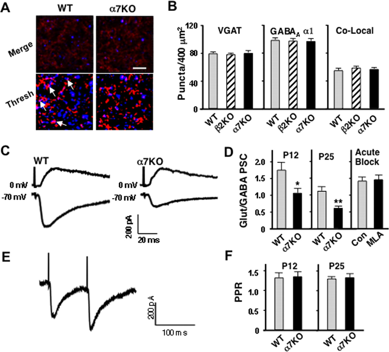 Glutamatergic Synapse Formation Is Promoted By 7 Containing Bruno Trans Brake Wiring Diagram Download Figure