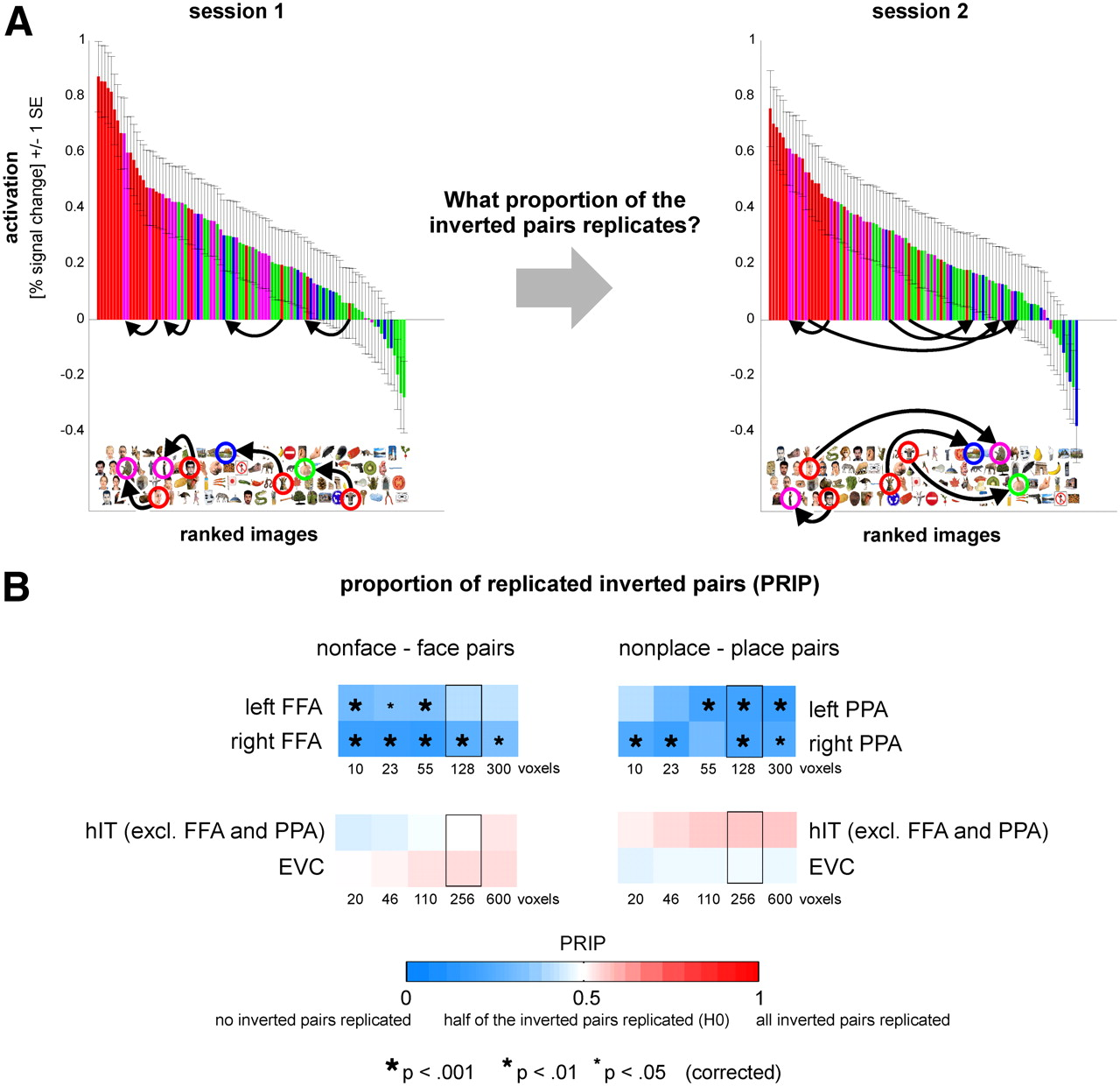 Categorical, Yet Graded – Single-Image Activation Profiles of Human