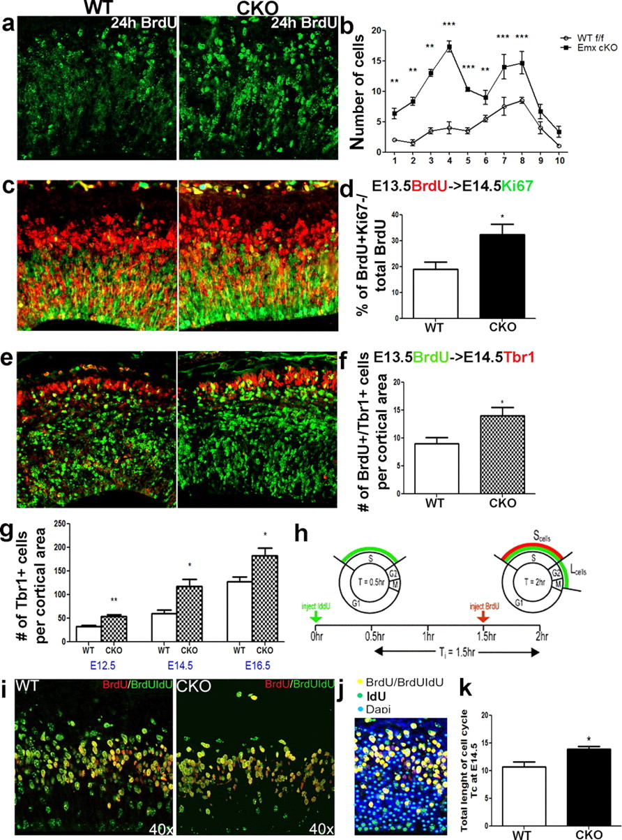 Disrupted Erk Signaling During Cortical Development Leads To Dc12v5gdiyozonegeneratorozoneplatecircuitboard5ghr Download Figure