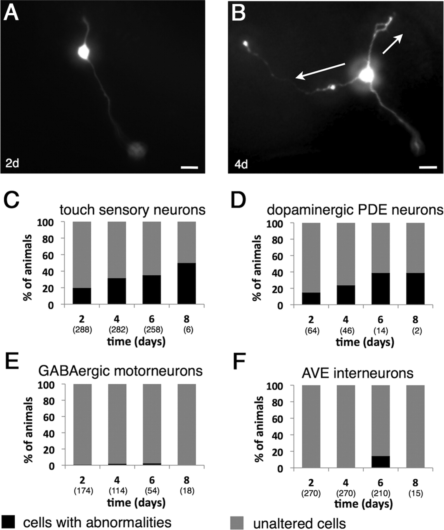 Neurite Sprouting and Synapse Deterioration in the Aging