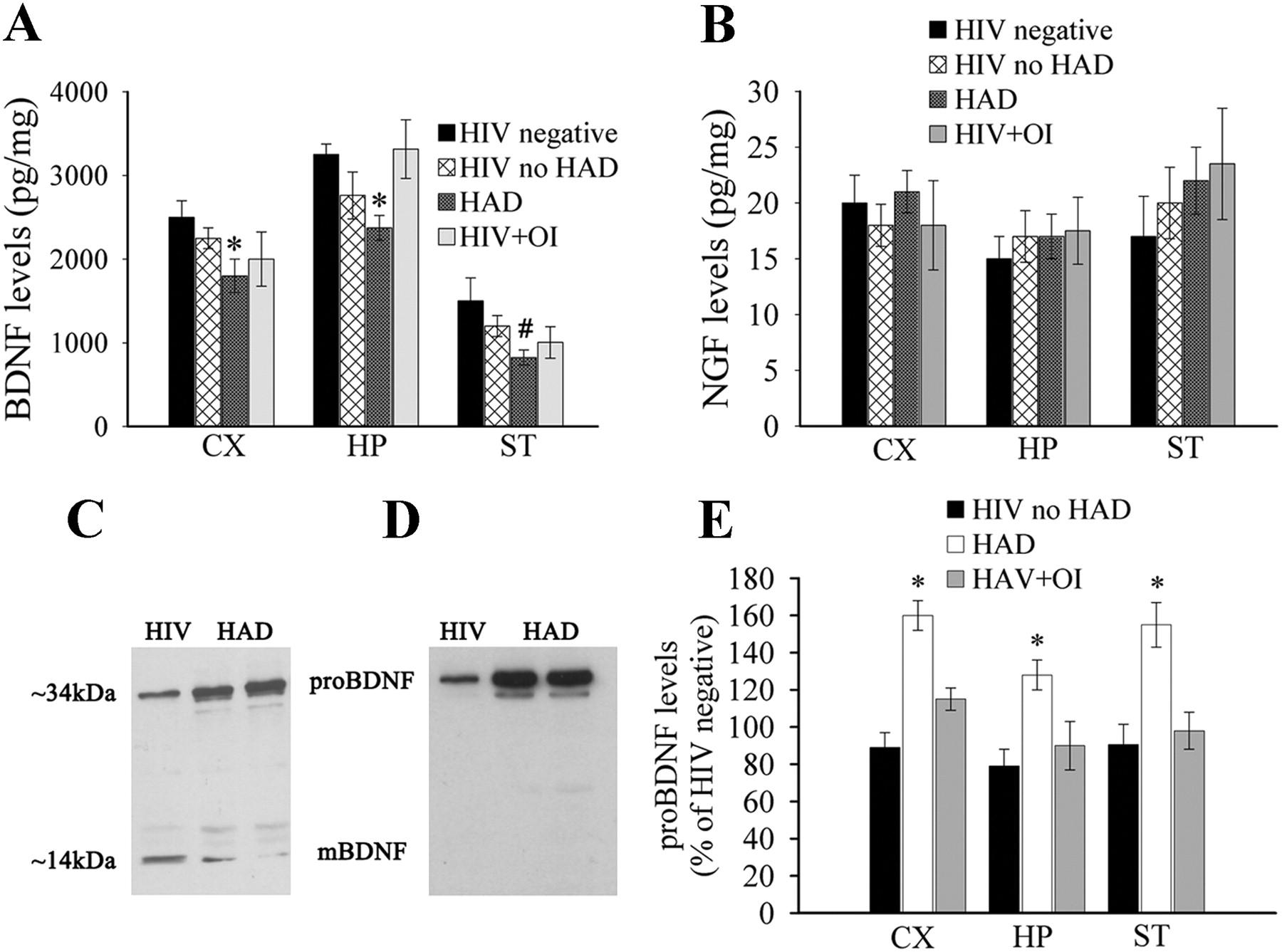 Human Immunodeficiency Virus Type 1 Alters Brain-Derived