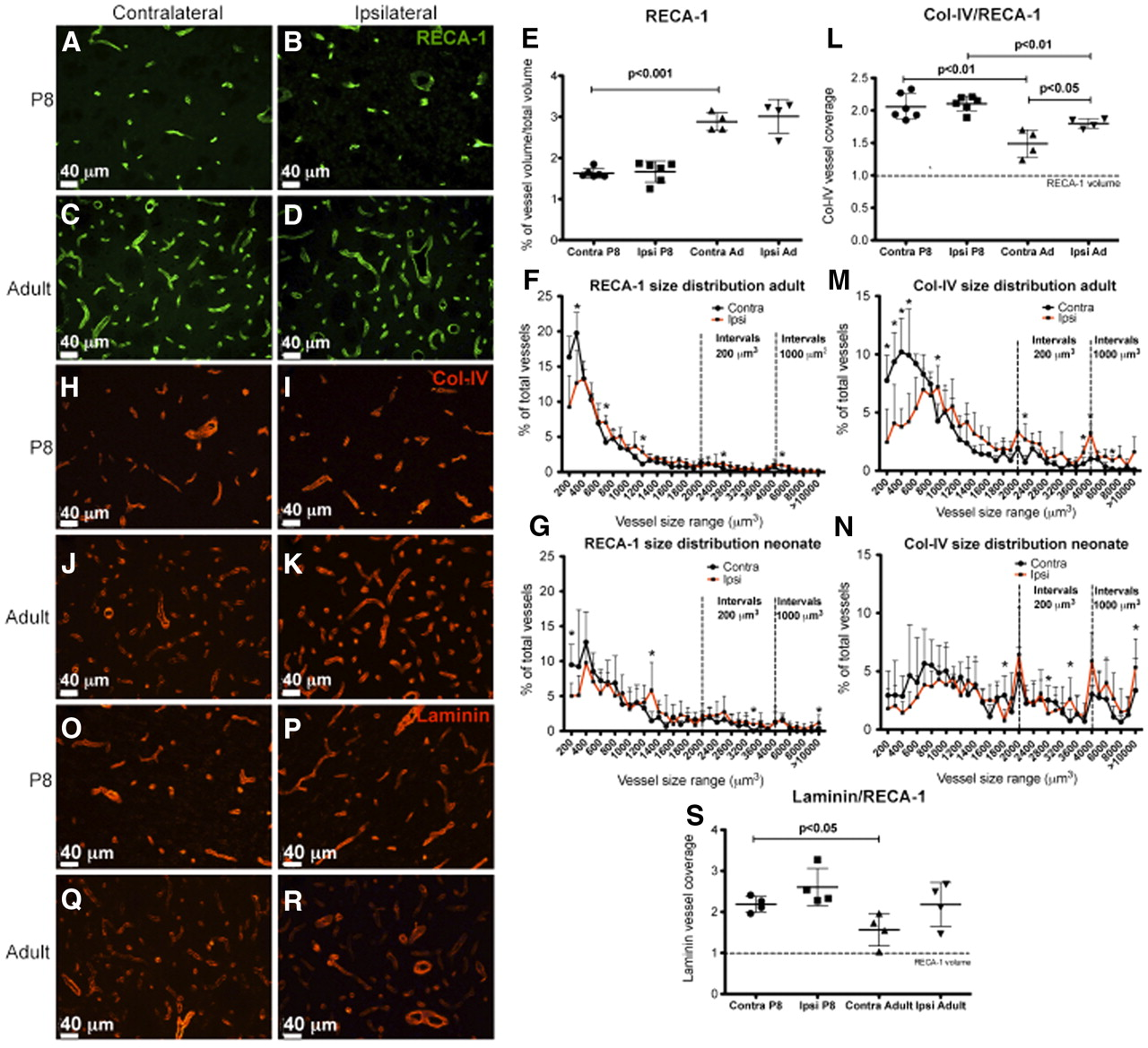 Blood–Brain Barrier Permeability Is Increased After Acute