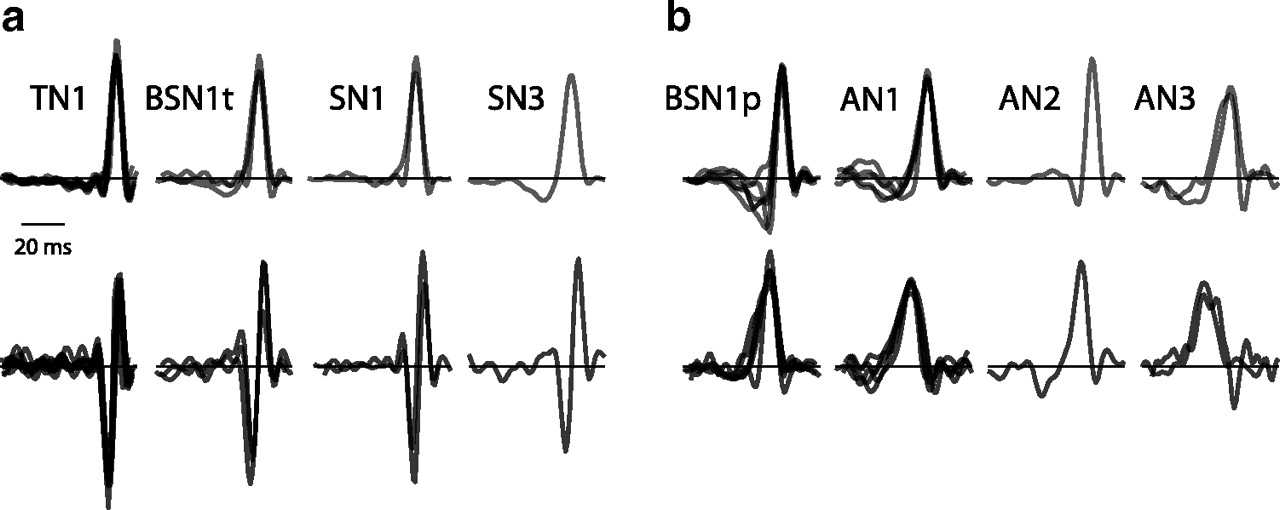 Nonlinear Computations Underlying Temporal And Population Sparseness