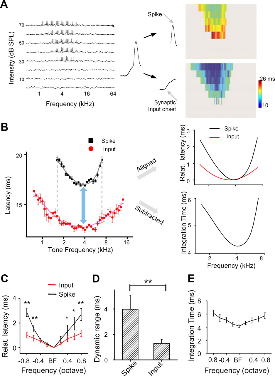 Generation Of Spike Latency Tuning By Thalamocortical Circuits In Lm 567 Ic Touch Tone Decoder Download Figure
