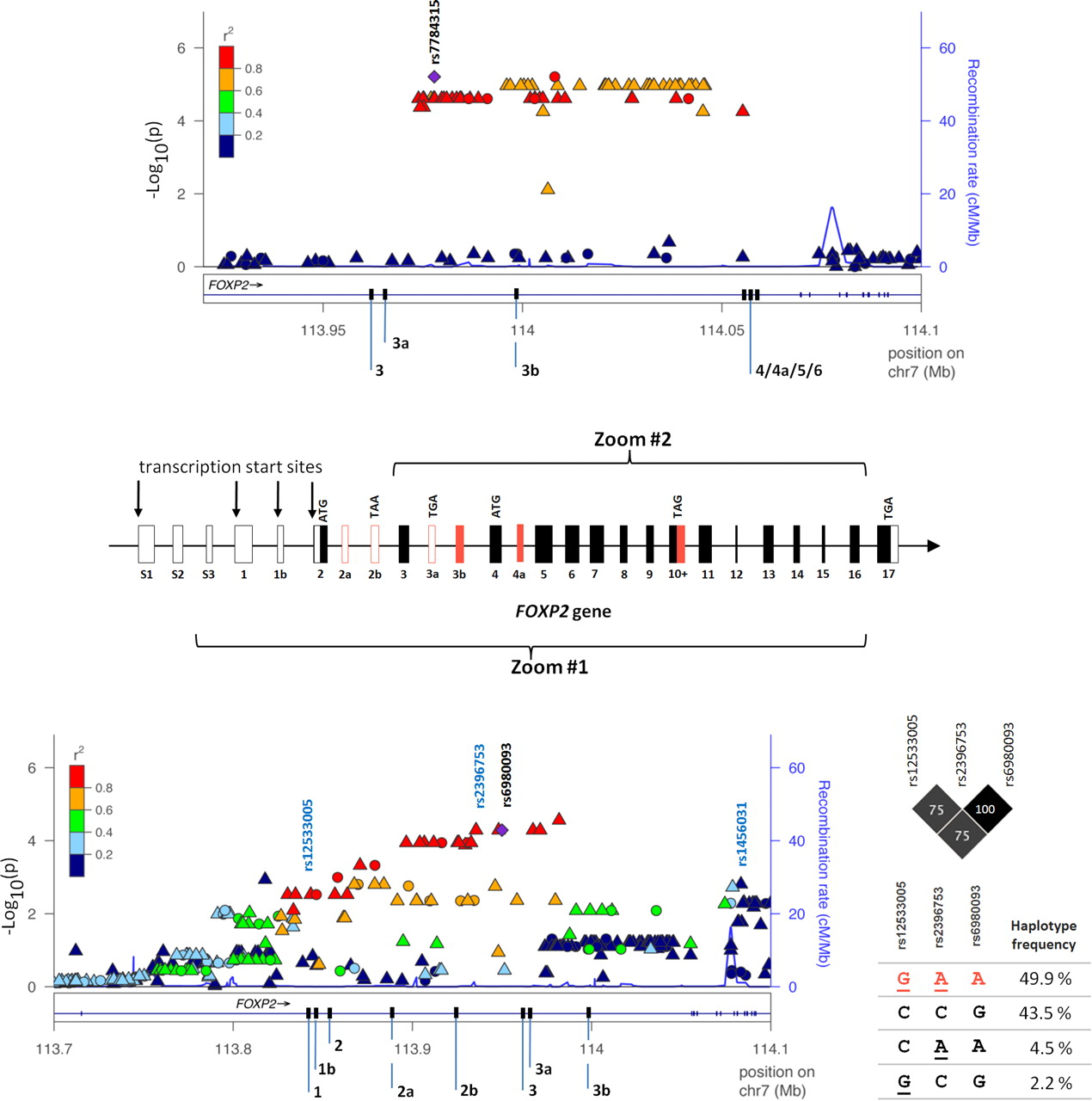 Genetic Variants of FOXP2 and KIAA0319/TTRAP/THEM2 Locus Are