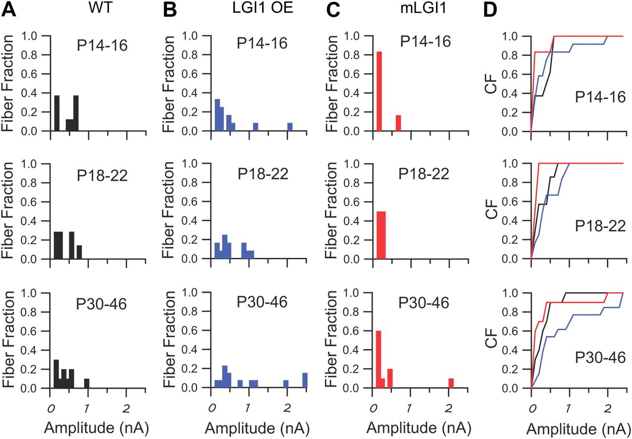 ae32bfd91b812 Epilepsy Gene LGI1 Regulates Postnatal Developmental Remodeling of ...