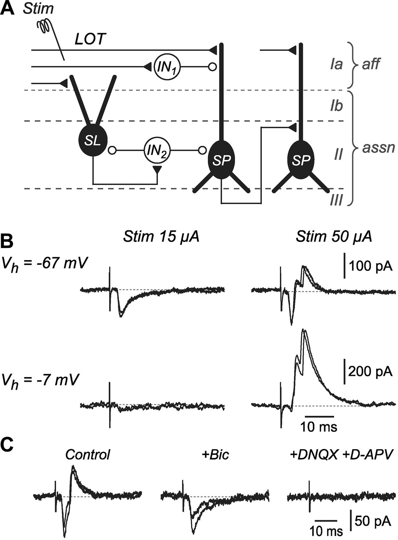 Microcircuits Mediating Feedforward And Feedback Synaptic Inhibition Cascade 29 Boat Wiring Diagram Download Figure