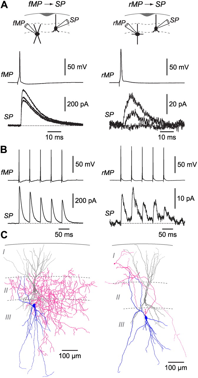 Microcircuits Mediating Feedforward And Feedback Synaptic Inhibition Of Series Circuits Whereby Components Share The Same Current Download Figure Open In New Tab