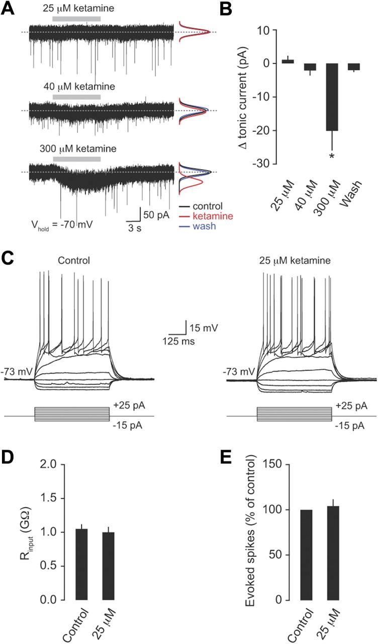 Tonic Inhibition Enhances Fidelity of Sensory Information