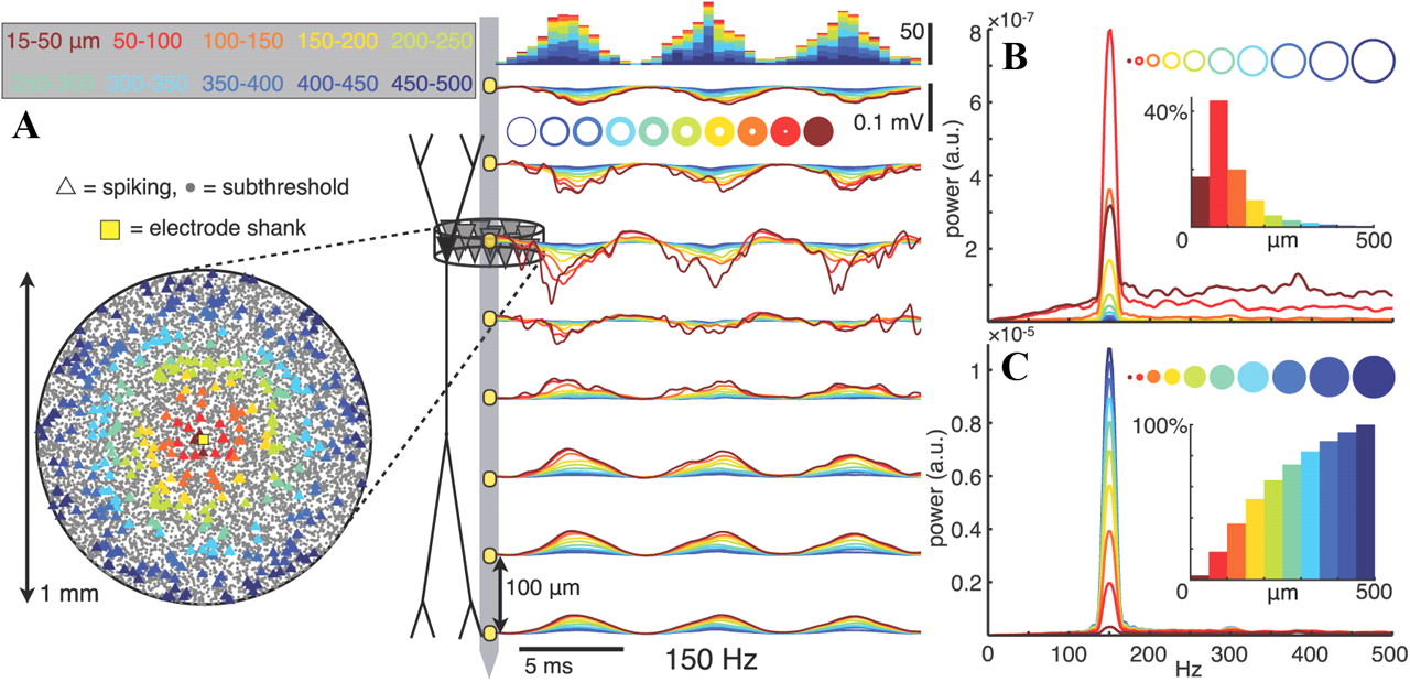The Spiking Component Of Oscillatory Extracellular Potentials In Circuit A Capacitive Discharge Firing Box Resembles This Download Figure