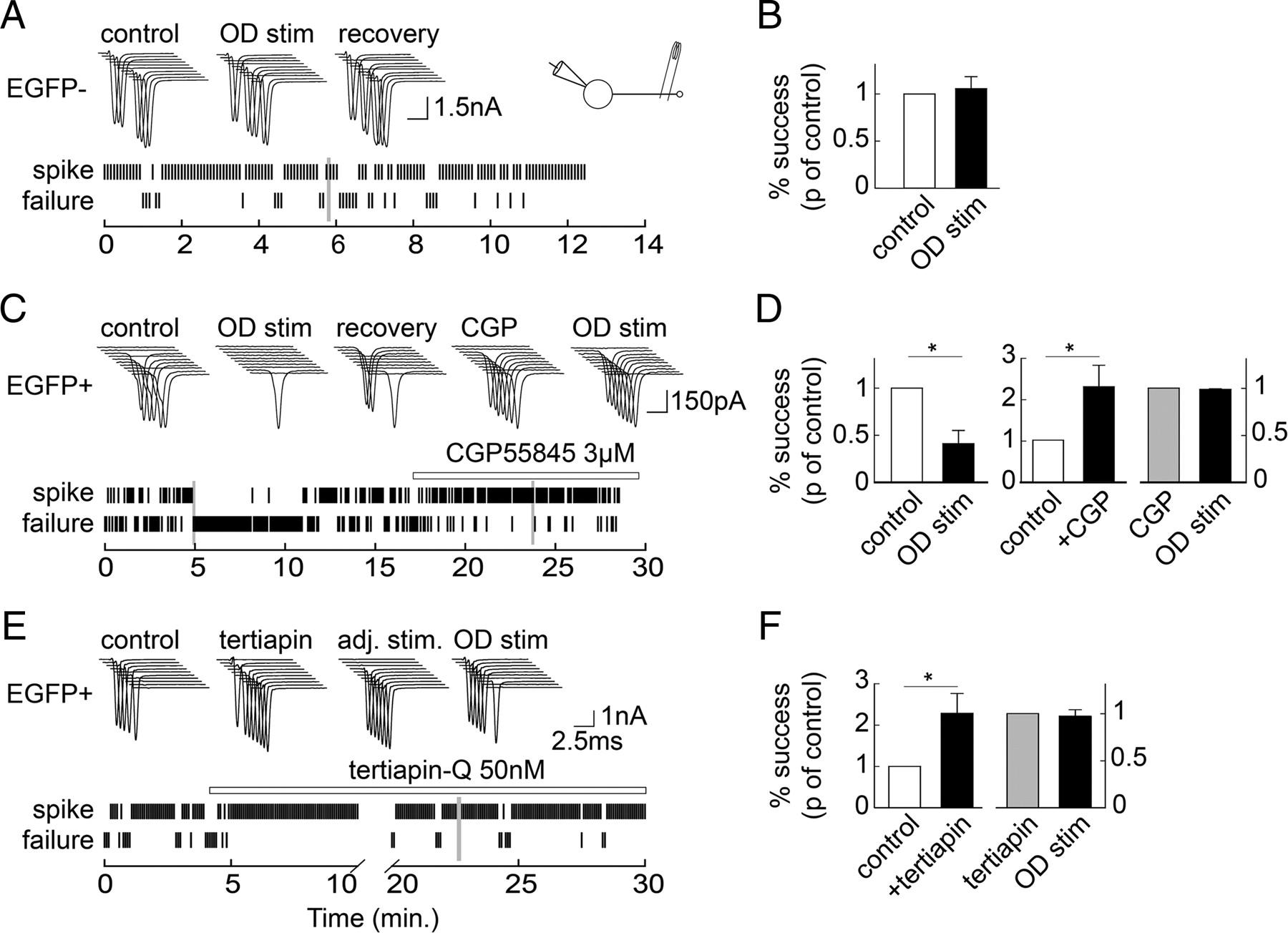 Presynaptic But Not Postsynaptic GABA Signaling At Unitary Mossy