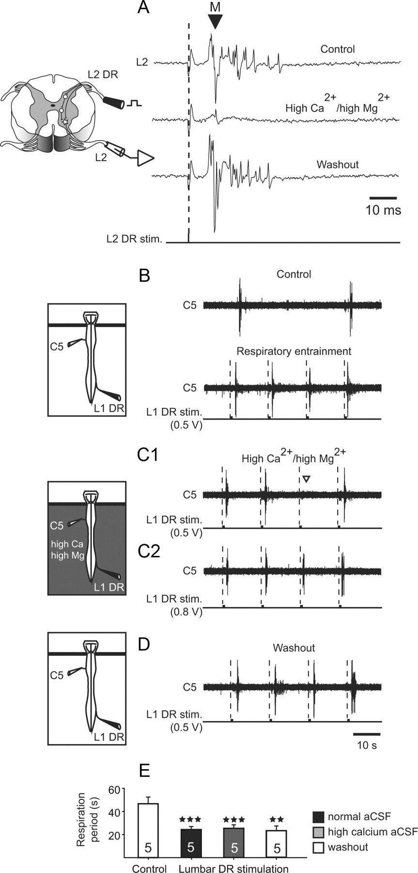 Spinal and Pontine Relay Pathways Mediating Respiratory Rhythm