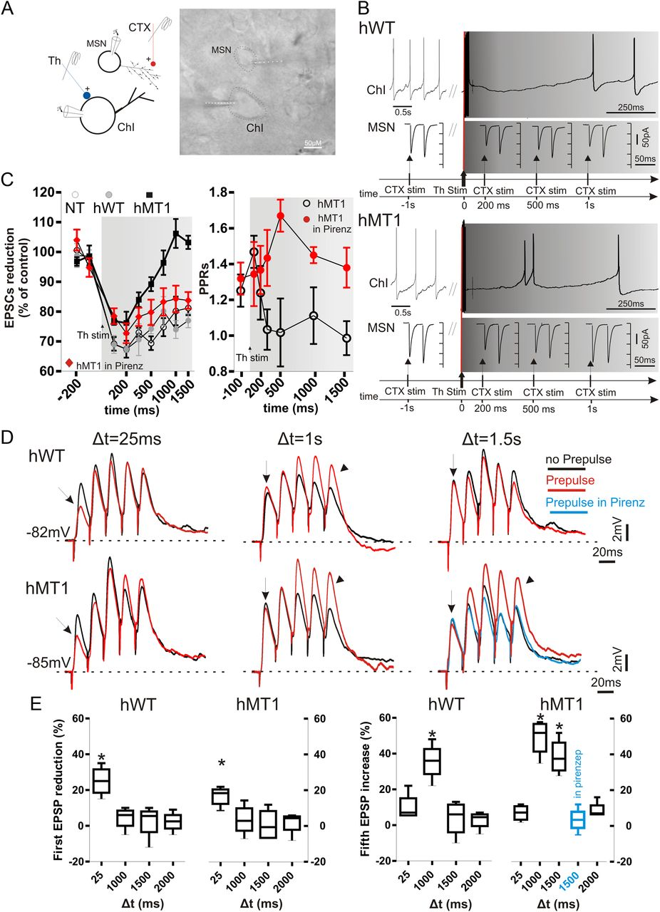 Cholinergic Dysfunction Alters Synaptic Integration Between Low Power Optical Interrupter Pdf Modulated Light Received Pl Tone Download Figure