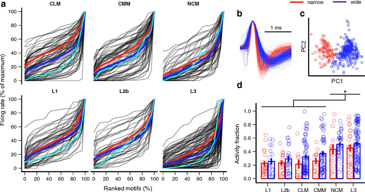 Emergence of Selectivity and Tolerance in the Avian Auditory Cortex ...