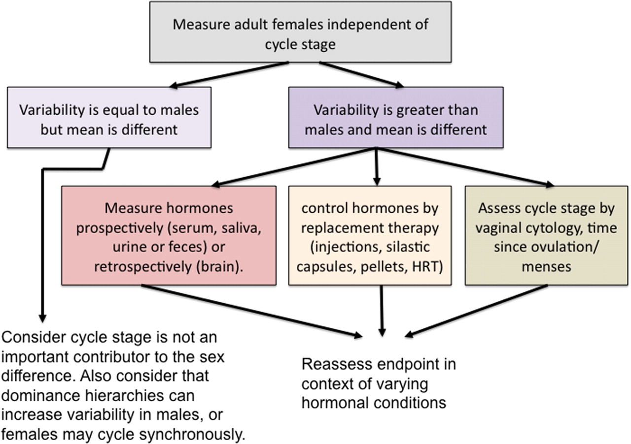 Distinct Differences Mark Male Female >> Sex Differences In The Brain The Not So Inconvenient Truth