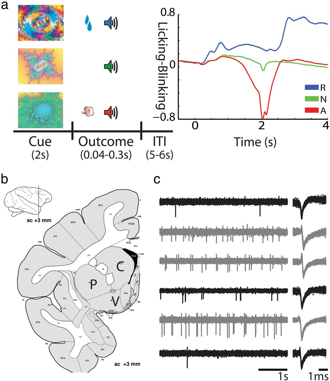 Encoding by Synchronization in the Primate Striatum