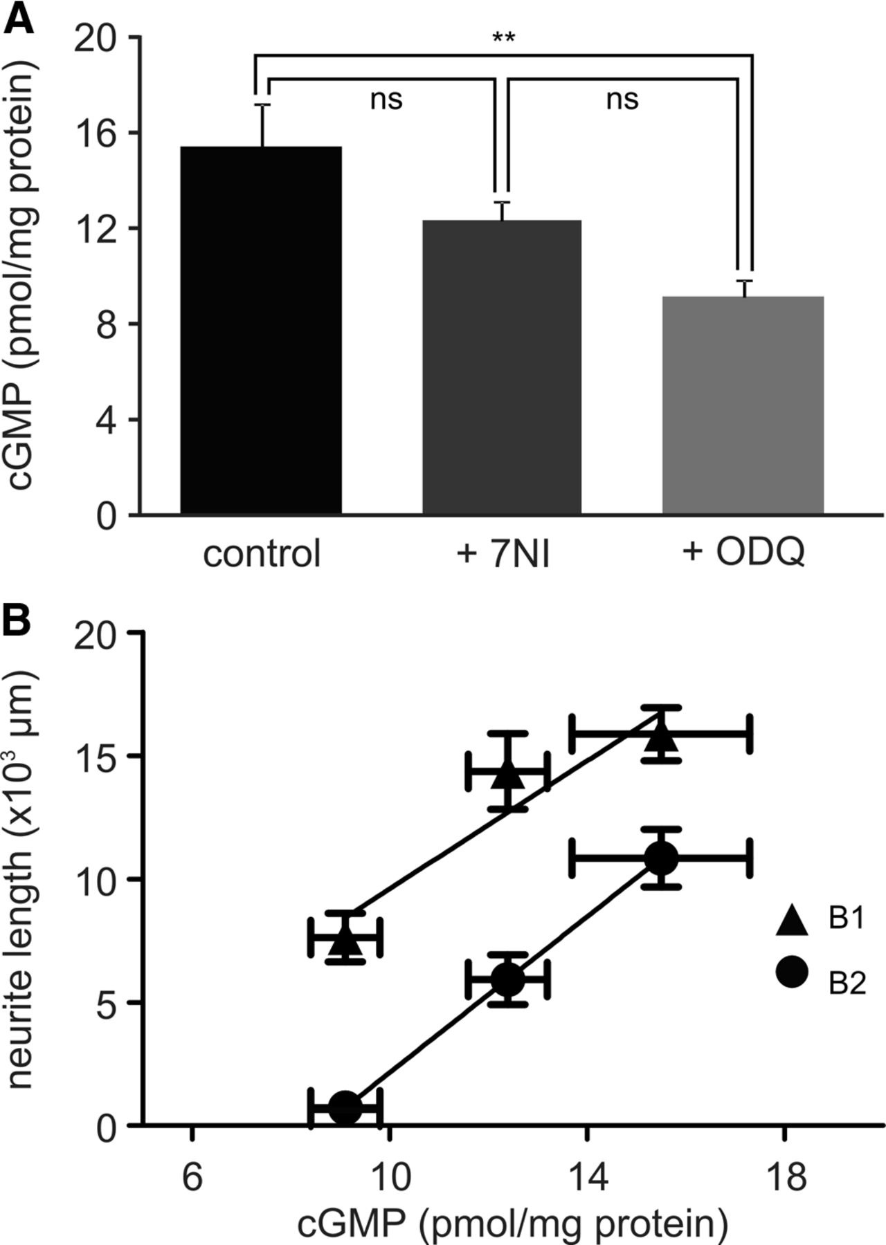 Nitric Oxide Synthesis and cGMP Production Is Important for Neurite ...
