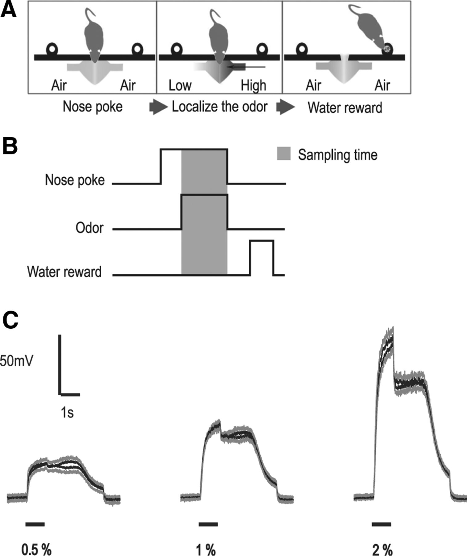 Laterality and Symmetry in Rat Olfactory Behavior and in Physiology