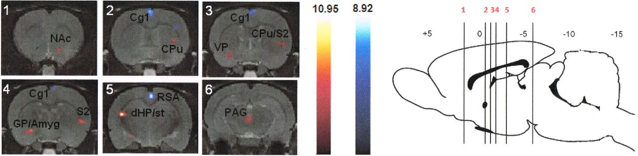 Mapping Brain Metabolic Connectivity in Awake Rats with μPET