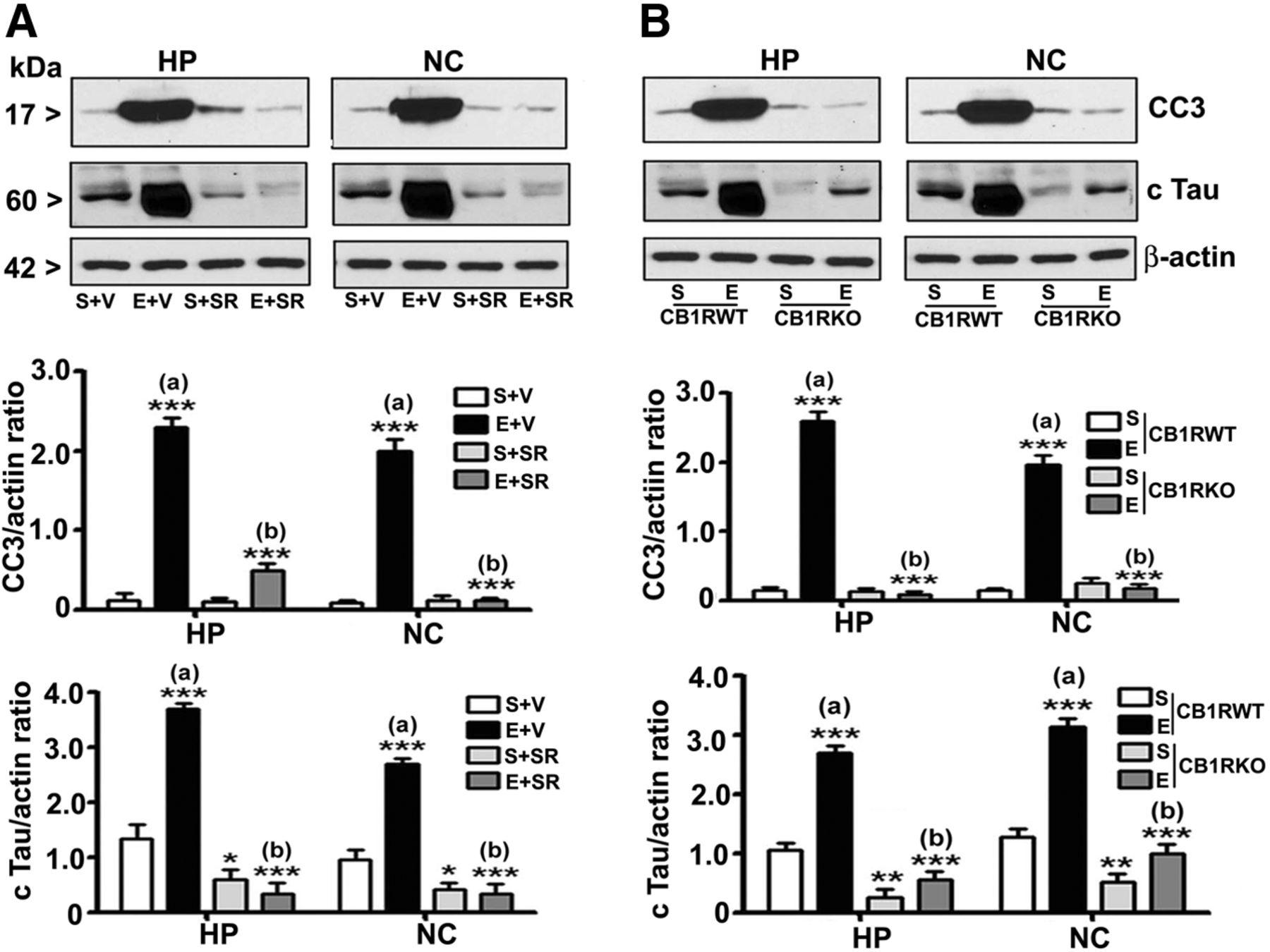 Anandamidecb1 Receptor Signaling Contributes To Postnatal Ethanol El Rel Negro De La Izquierda Es Que Se Aade Para Controlar Download Figure