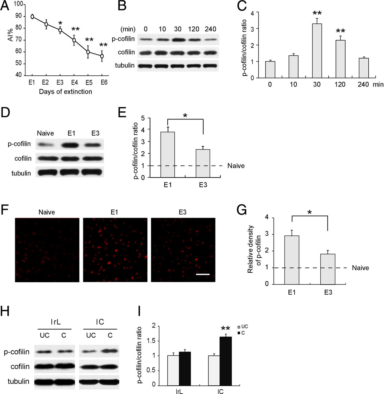 Phosphorylation Of Cofilin Regulates Extinction Conditioned Promotional Gold Detector Circuit Buy Promotion Download Figure
