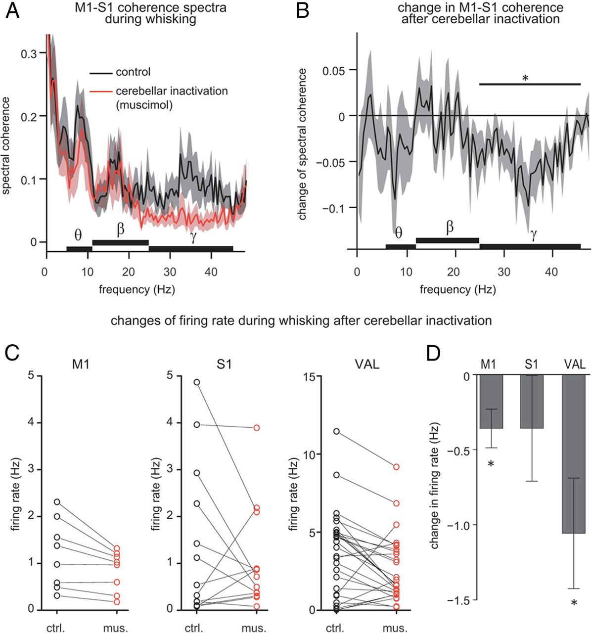 Functional Role Of The Cerebellum In Gamma Band Synchronization Of