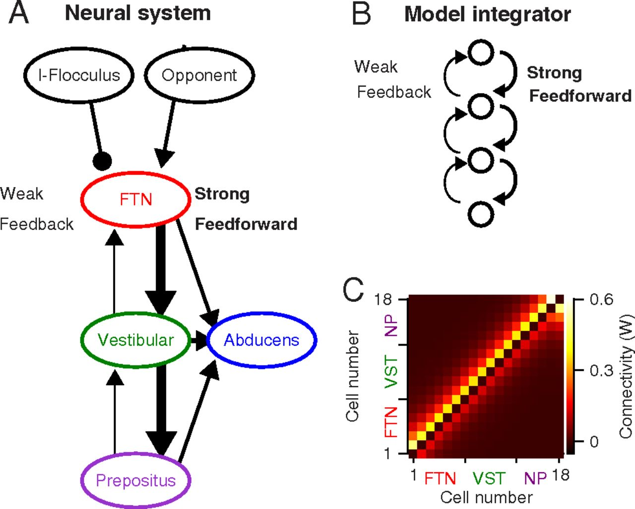 Diversity Of Neural Responses In The Brainstem During Smooth Pursuit An Integrator How Can We Explain This Difference Circuit Download Figure