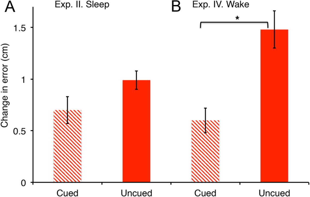 The Role Of Memory Reactivation During Wakefulness And Sleep In