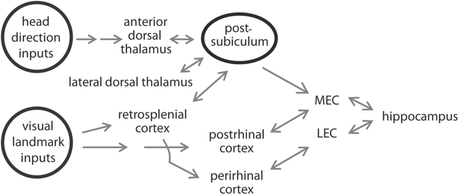 The Postsubiculum And Spatial Learning Role Of Postsubicular Wiring Diagram For Steven Ma Download Figure