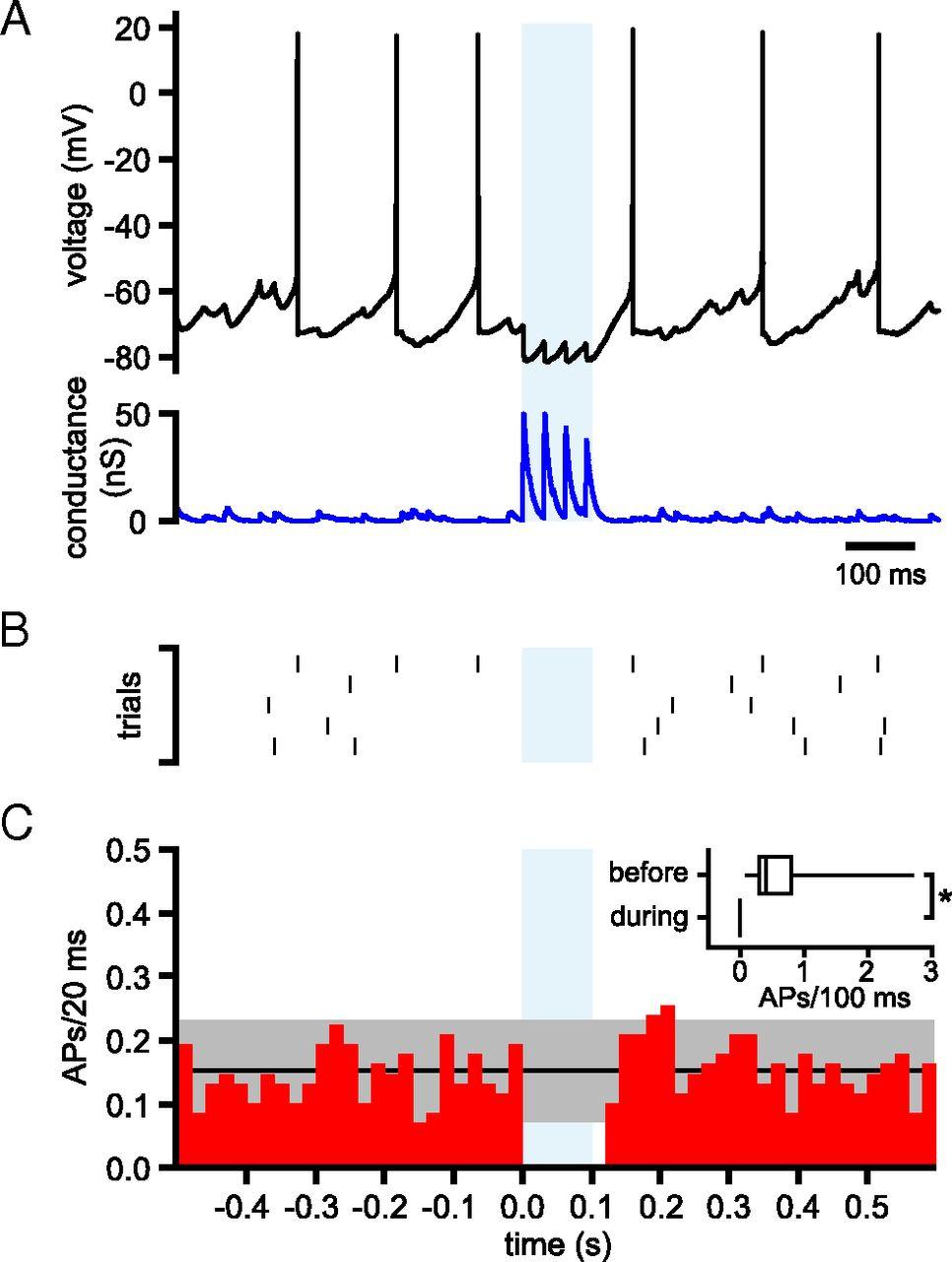 Short Term Depression Of External Globus Pallidus Subthalamic Cap Discharge Circuit O27 Switch Download Figure